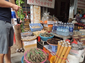 interesting dried snakes and such