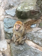 monkey is chill